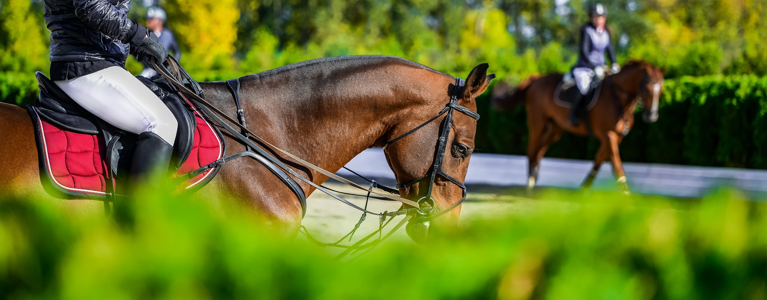 Horse Riding Exercises On Improving Riding Aids Horse Riding Network