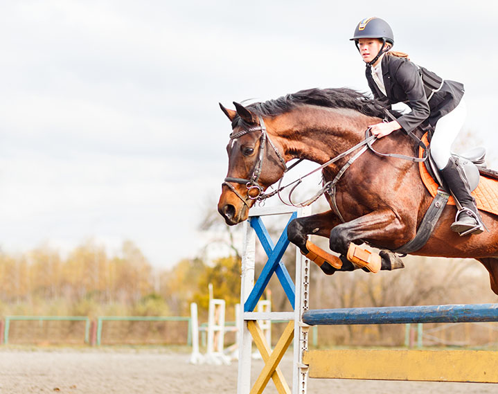 Horse Riding Network