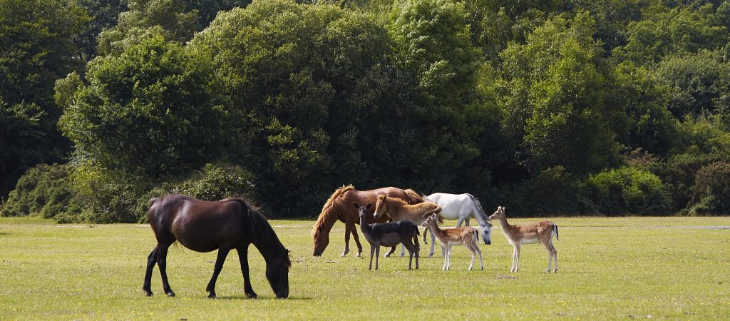 horses and dear in new forest