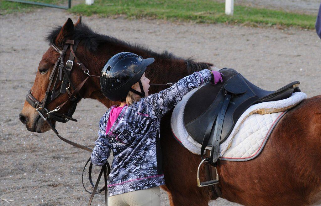 morning star therapeutic horseback riding new jersey