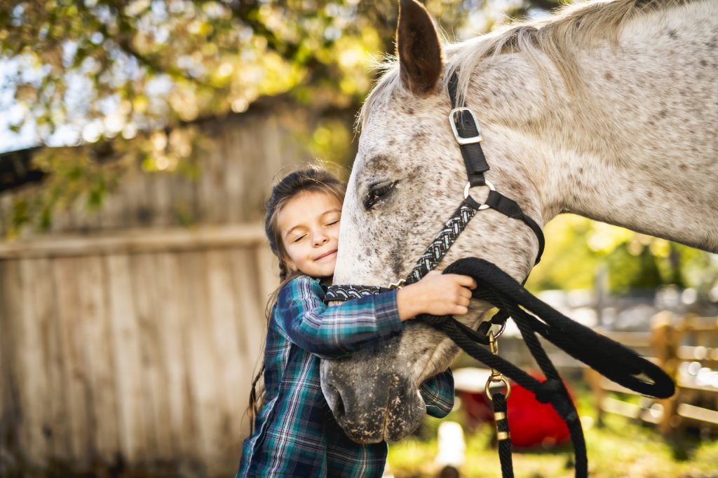 ground work with horse therapeutic riding