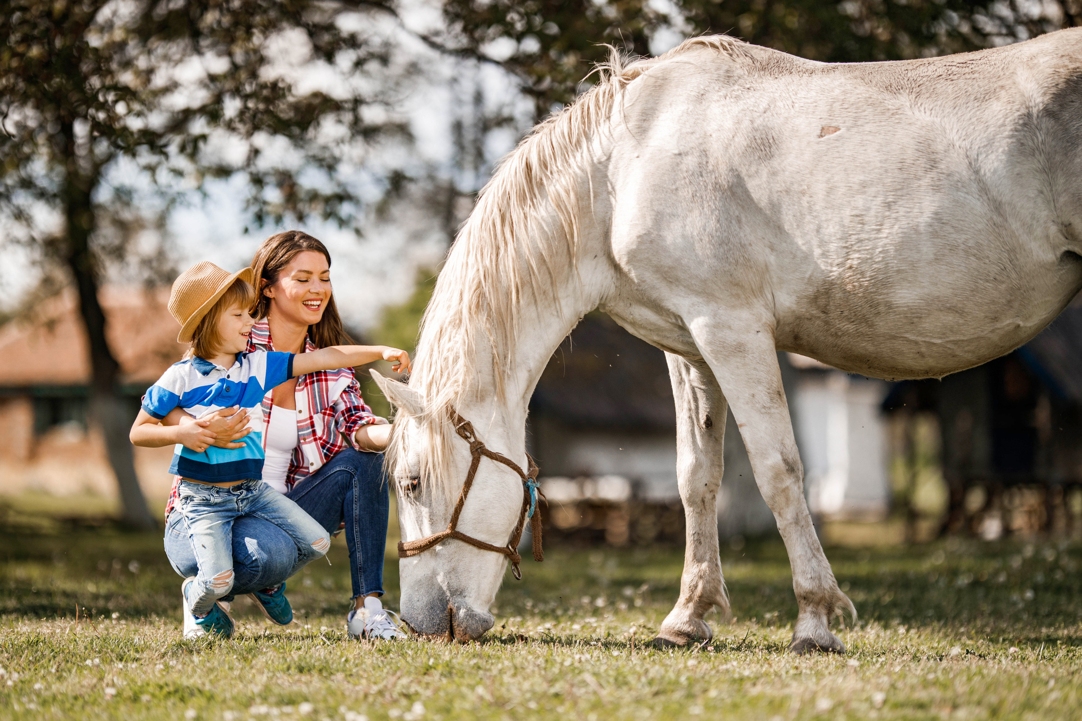 what is equine assisted learning