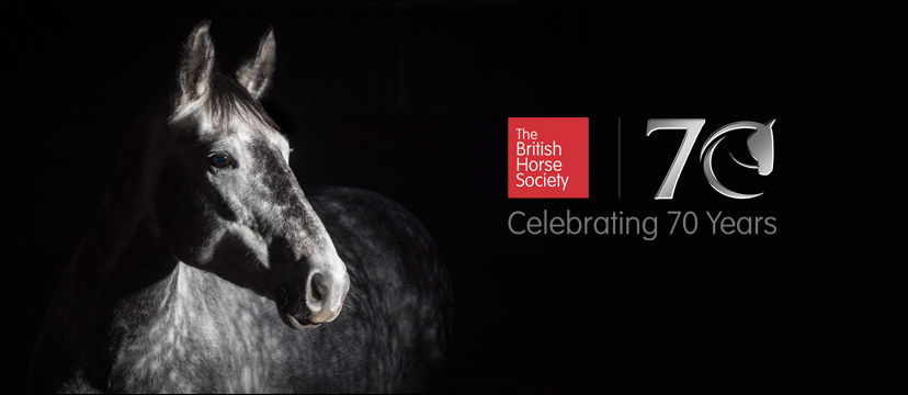 horse riding charity uk british horse society