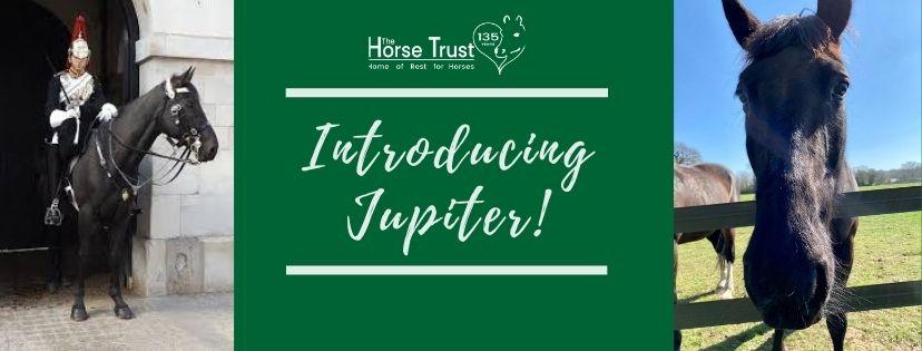horse trust equine charity uk