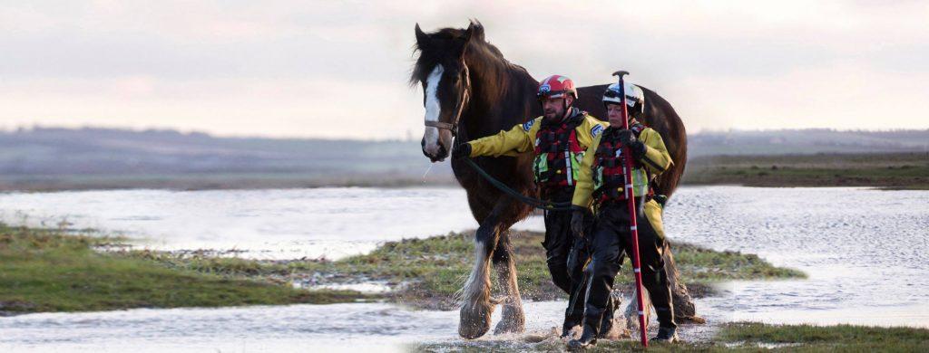 rspca horse charities uk