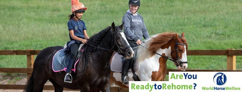 world horse welfare horse charity in the uk